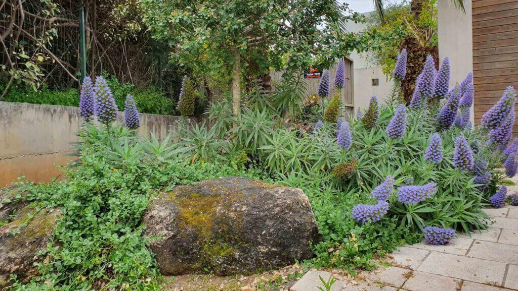 שימוש באבנים מעוצבות ופרחים סגולים בתכנון גינות