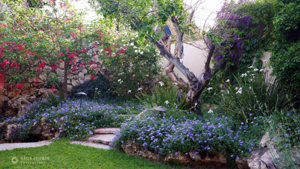 תכנון גינות - עץ ופרחים אדומים בגינה