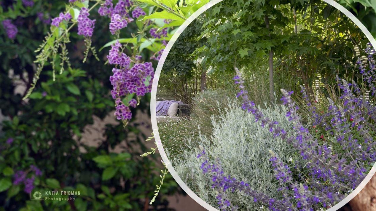 שילוב של צמחי בר בגינות מעוצבות